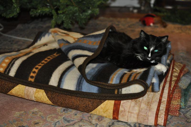Snuggled cat
